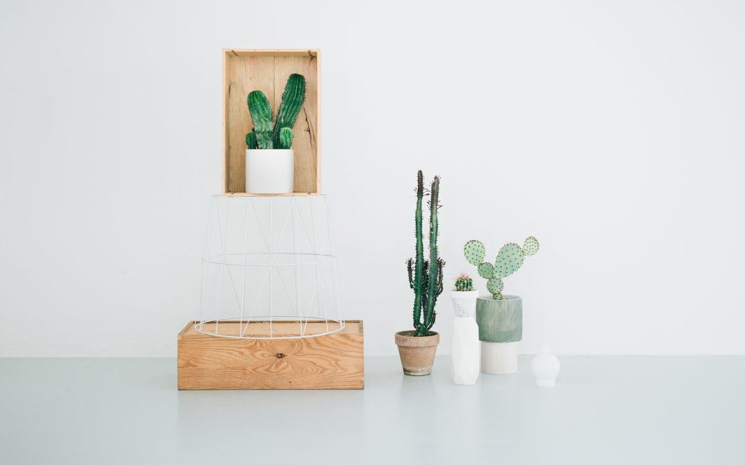 Kaktus København
